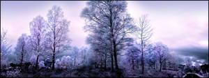 Birch Trees Pano Infrared... by MichiLauke