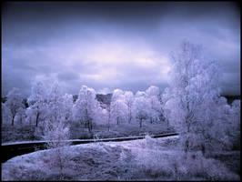 Trossachs Birch Trees Infrared by MichiLauke