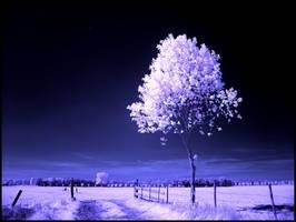 Treee III infrared... by MichiLauke