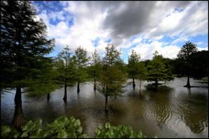 Arboretum Lake II... by MichiLauke