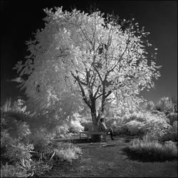 Tree infrared III... by MichiLauke