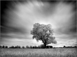 Home Tree V infrared... by MichiLauke