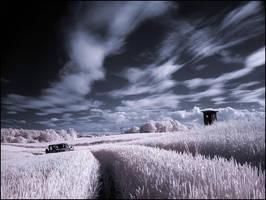 Wheatfield infrared by MichiLauke