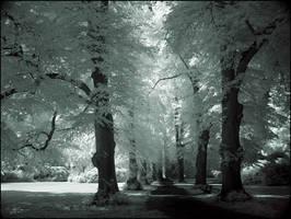 Tree Alley II infrared... by MichiLauke