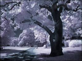 Heart Tree infrared... by MichiLauke