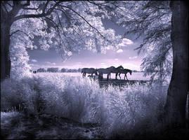 Horses infrared... by MichiLauke