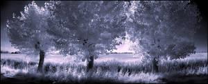 Three Willow Trees infrared... by MichiLauke