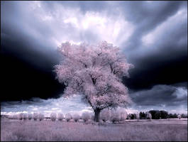 My Home Tree infrared... by MichiLauke