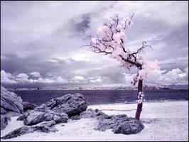 LOST Beach II Infrared by MichiLauke