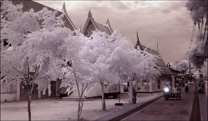White Trees Koh Larn infrared by MichiLauke