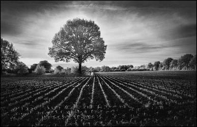 Evening Mood Tree infrared II by MichiLauke