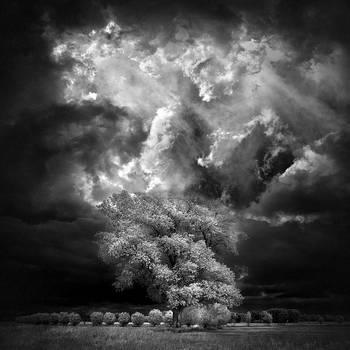 Home Tree - infrared by MichiLauke