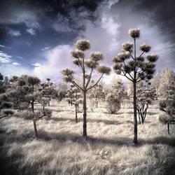 Pushel Trees by MichiLauke