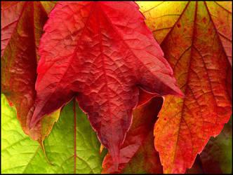 Autumn Leaves... by MichiLauke