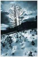 Winter Sun... by MichiLauke