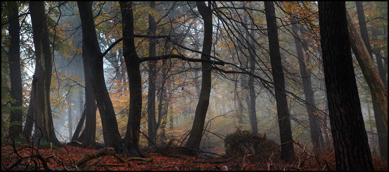 Just a rainy foggy day III... by MichiLauke