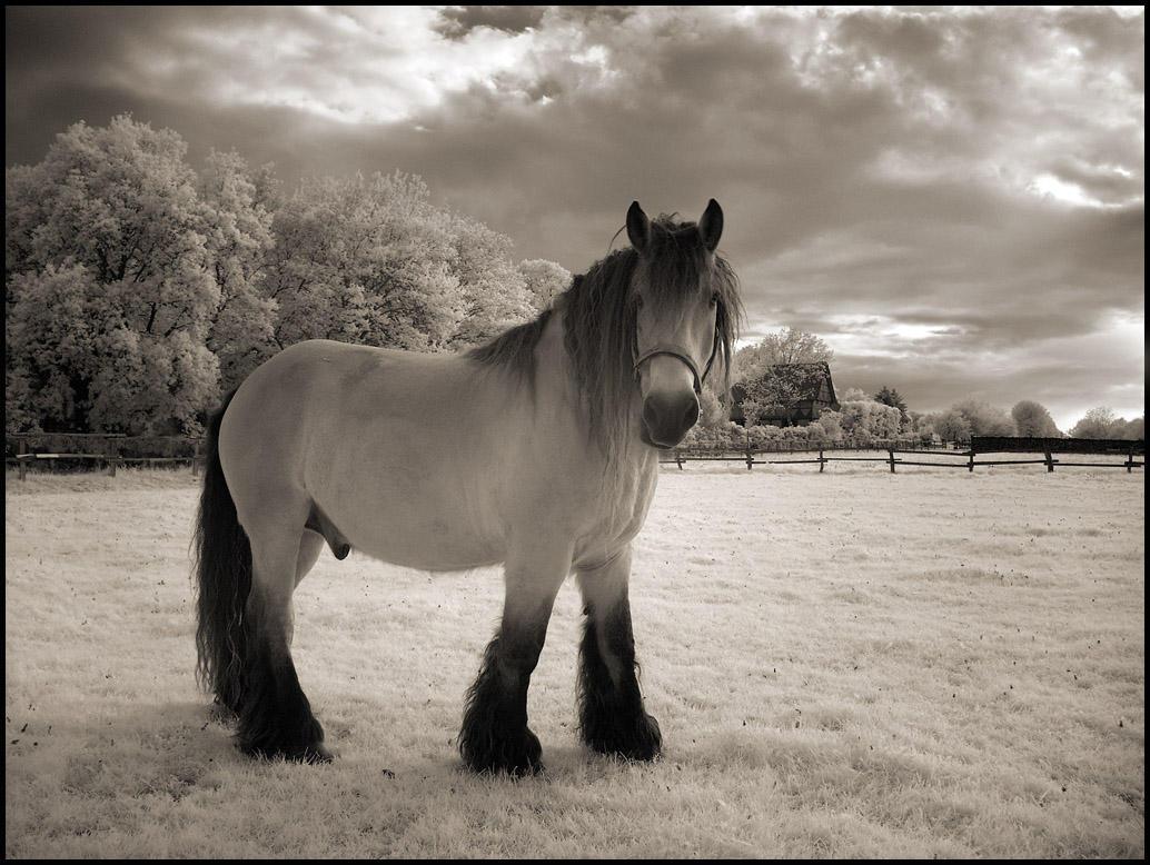 The Horse IR Infrared by MichiLauke
