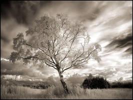 Birch... by MichiLauke