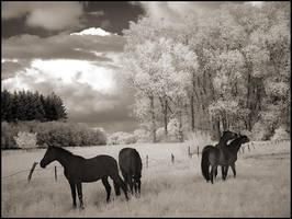 Horse Paddock... by MichiLauke