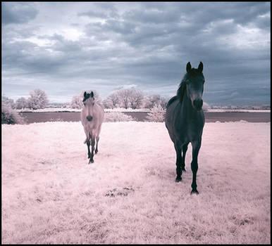 Horses Dream infrared... by MichiLauke