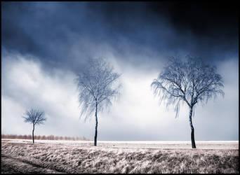 Three Birches infrared... by MichiLauke