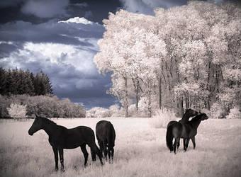 Horses Dreams IR Infrared by MichiLauke