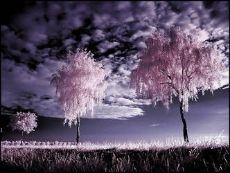 Three Birches infrared ... by MichiLauke