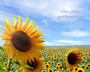 Sun Flowers by JJGP