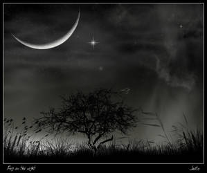 Fog on the night by JJGP