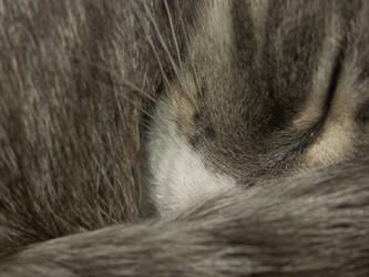 Extreme Close-up of Miyu by ayukat