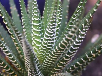 Close-up cactus 2 by ayukat