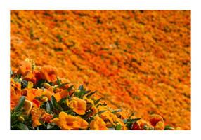 Details of a Japanese Garden by jamesjr2