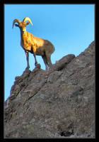 Mountain Goat by jamesjr2