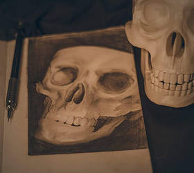skull sketches by vincenthachen