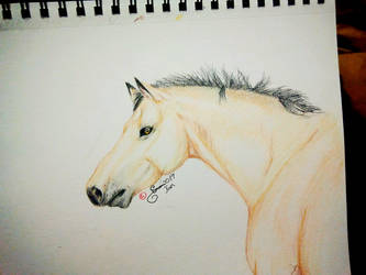 Colored pencil: Horse by ValsparinDragon