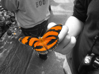 Orange Butterfly by TheZombie17