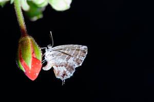 butterfly 4 by Bizzio