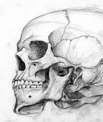 Skull Sketch by Kezef