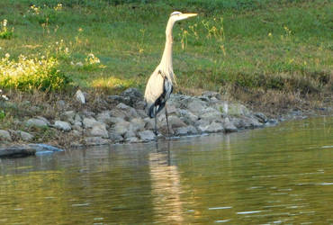 Out fishing for breakfast by knighttemplar1