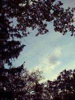 one day I fly away by Silmarilian