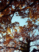 colors of trees by Silmarilian