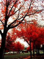 Fall by L1NDS4YJUN3