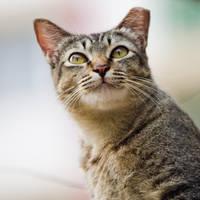 Cat 53 by eselite