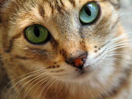 cat by feartox