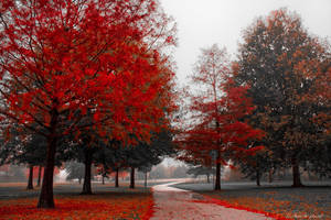 The Fire Oaks by scarecrow426