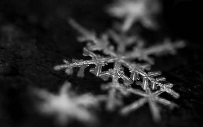 Winter's herald by SideVVays