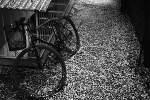 Flowered Bike by OnurKorpeoglu