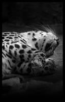 sleeping by EatsNoCheese