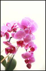 Flower by EatsNoCheese
