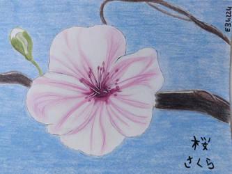 Kirschblte, Cherryblossom, ,  by eb4224